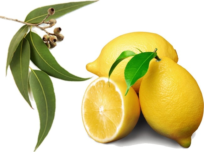 Lemon and Eucalyptus