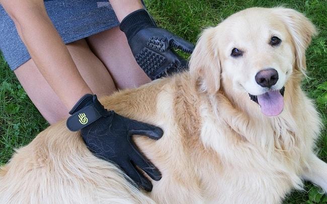 Brush Your Dog